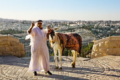 Arab donkey on the observation deck of the Mount of olives
