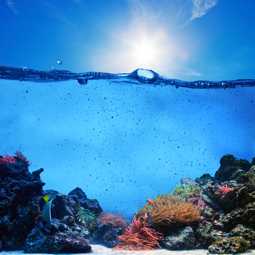 Underwater scene. Coral reef, blue sunny sky shining through clean water. Space underwater for you to fill or just use standalone. High res