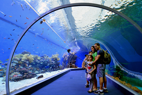 EILAT, ISR - APRIL 16 2015:Visitors in the Shark Pool of Coral World Underwater Observatory aquarium in Eilat, Israel.It's the biggest shark pool in the Middle East, covering an area of 1000m2.